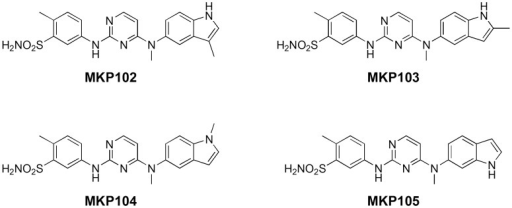 Structures of MKP102, MKP103, MKP104, and MKP105.MKP102 and 103 are derivatives that possess a methyl group at the C-3 and C-2 positions of the indole ring, respectively. MKP104 is a derivative with a methyl group on the indole nitrogen. MKP105 is a regioisomer of MKP101.