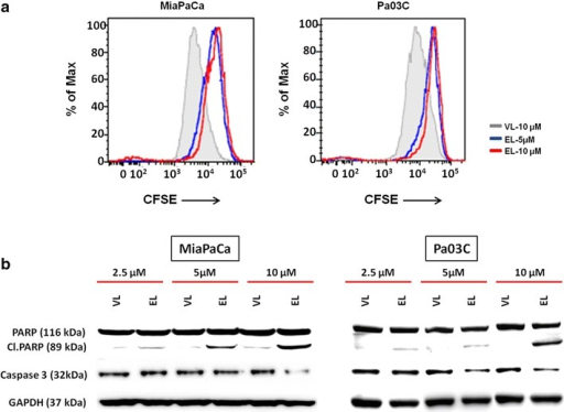 Lipo-EF24 inhibits proliferation and induces apoptosis in pancreatic cancer cells. a CFSE staining assays were used to measure the effect of Lipo-EF24 on pancreatic cancer cell proliferation. CFSE-labeled MIAPaCa and Pa03C cells were treated with Lipo-EF24 at concentrations of 5 and 10 µM or void liposomes for 48 h and then analysed using flow cytometry. Proliferation was indicated by a decrease of fluorescence intensity. b In order to determine apoptosis rates, MIAPaCa and Pa03C cells were treated with indicated concentrations of void liposomes or Lipo-EF24 for 24 h and protein expression levels of cleaved PARP or procaspase-3 were quantified from whole cell lysates by immunoblotting