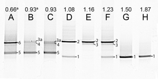 Photograph of DGGE gel with the PCR products of the 16S rRNA genes from steady state reactor samples, with different Ac/N ratios (cropped; no other bands were present in the lanes). The numbers on the right side of the bands correspond to the markers in Table 5. Bands labeled with the same number, contained the same sequence. Note that for the culture in lane A denitrification is dominant and in H DNRA is. The unprocessed DGGE photo is included in Figure S2. (a) The influent was supplemented with 1.4 mM ammonium.
