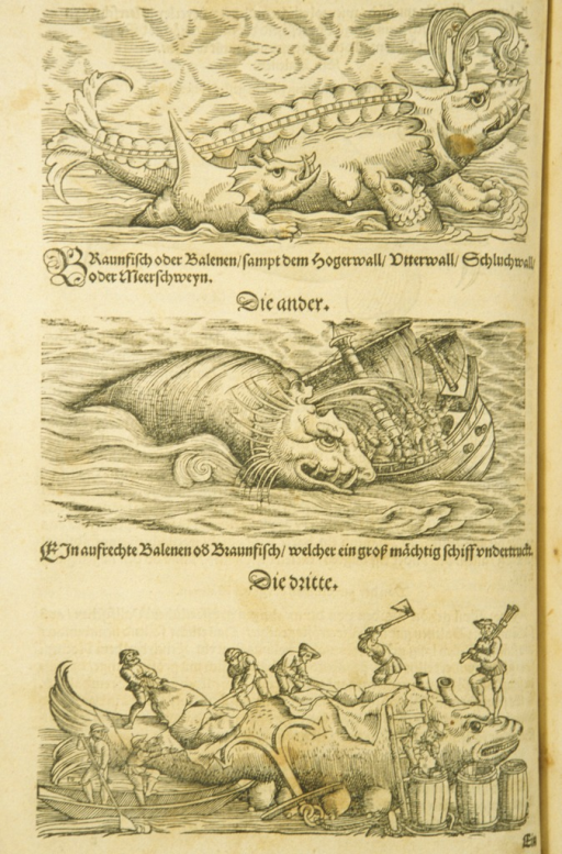 <p>Three woodcuts of porpoises.</p>