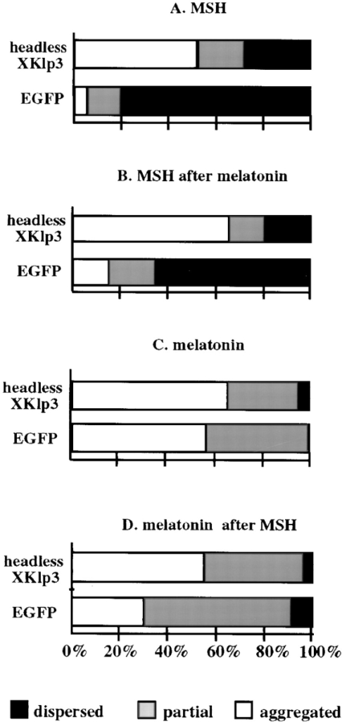 Quantitative analysis of pigment distribution in  cells transfected with either  control DNA (pEGFP-C1)  or headless Xklp3 (pEGFP-headless Xklp3). Melanophores were transfected by  electroporation and plated  on coverslips, and after 72 h  of expression, cells were incubated in serum-free medium containing MSH (A)  or melatonin (C) for 1 h. In  sequential treatments (B  and D), cells were incubated  for 1 h in melatonin followed  by 1 h in MSH (B) or vice  versa (D). The horizontal  axis shows the percentage of  cells that were scored as aggregated (white), partially  dispersed (gray), or dispersed (black). For each  treatment, 100 cells were  scored. Data shown here are  representative from one of  four independent experiments.