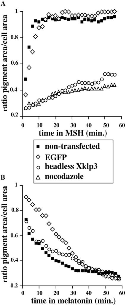 Headless Xklp3 affects the kinetics of pigment dispersion but not aggregation. Video-microscopic analysis of pigment  movement was conducted on nontransfected melanophores, on  melanophores 72 h after transfection, or immediately after treatment with nocodazole (see detailed description in Materials and  Methods). Representative plots of changes in pigment distribution, determined by the ratio of pigment area to total cell area  over time: (A) dispersion; (B) aggregation.