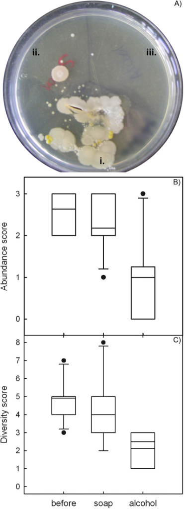 Microbes of the skin. Agar plates were inoculated with participants' thumb i) before washing it, ii) after washing it with antibiotic soap and warm water for 30 seconds, and iii) after rubbing with an alcohol swab. A) A plate where alcohol was used efficiently. B) Box plots showing microbial abundance computed as a categorical score (3:>300 colonies, 2:50–300 colonies, 1:<50 colonies). Abundance did not significantly differ after washing with soap (p = 0.13), and was reduced by alcohol rubbing following hand washing (p = 0.03). C) Microbial diversity expressed as the number of visually differing colonies. Diversity did not significantly differ after washing with soap (p = 0.16), and was reduced by alcohol rubbing following hand washing (p = 0.02).