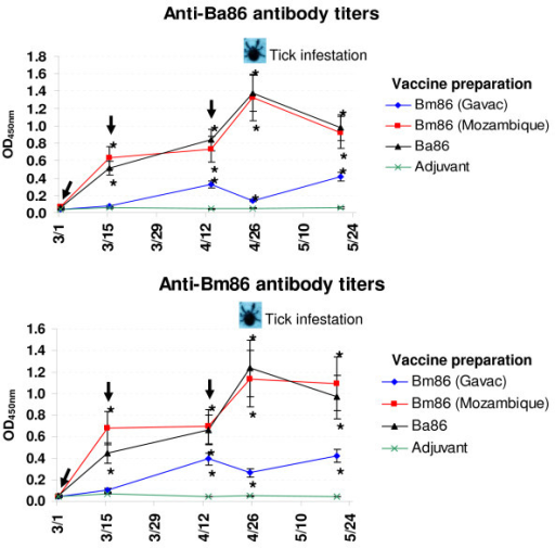 Antibody response in vaccinated cattle. Bovine serum antibody titers to recombinant Ba86 (Israeli strain) and Bm86 (Mozambique strain) antigens were determined by ELISA in cattle vaccinated with Bm86 (Gavac, Cuban Camcord strain), Bm86 (Mozambique strain), Ba86 (Israeli strain) and adjuvant/saline control. Antibody titers in immunized cattle were expressed as the OD450 nm value for the highest serum dilution (1:1000) and compared between vaccinated and control cattle using an ANOVA test (*P < 0.05). The time of vaccination shots (arrows) and tick infestation are indicated.
