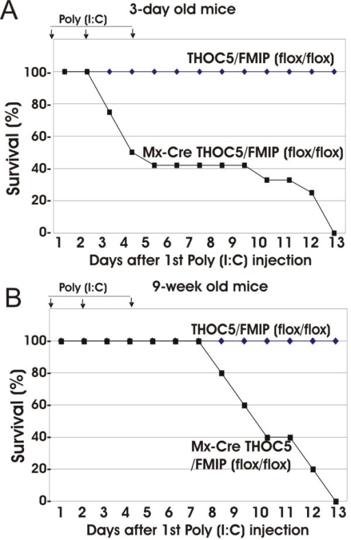Deletion of THOC5/FMIP is lethal in adult mice. Three day- (n = 25) (A) and nine-week-old (n = 7) (B) mice were injected with 50, and 500 μg of poly (I:C), respectively. Injection was performed i.p. three times at two to three day intervals. (arrows: poly (I:C) injection).