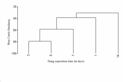 Dendogram based on hierarchical agglomerative clustering (group-average linking) showing the similarities between the dung beetle assemblages present during different stages of succession.