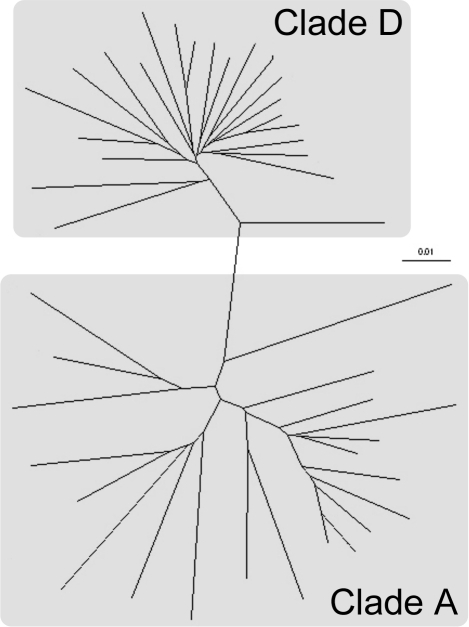 Radial tree showing degree of identity between the study participants' HIV isolates.RT-PCR was undertaken to amplify sequence from the reverse transcripase gene that was subsequently used to construct the tree. The branch lengths and scale correspond to the number of substitutions/mutations per site.