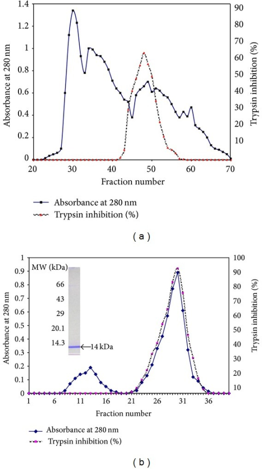 (a) Purification of BmPI using F2 dialyzed fraction on Sephadex G-75. Each fraction collected through the column is of 4.5 mL at an initial flow rate of 0.3 mL min−1. (b) Trypsin affinity purification of BmPI using fractions (42–58) from Sephadex G-75 and protein profile on 12% SDS-PAGE under reducing conditions. The retained BmPI was eluted with 100 mM HCl. Inset SDS-PAGE of pooled fraction (21 to 36): molecular weight markers are on the left and BmPI from trypsin affinity column chromatography are indicated on the right.