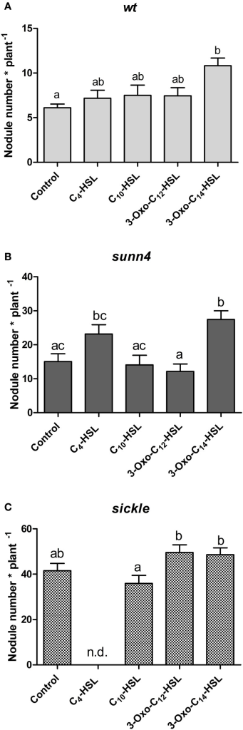 Nodule numbers of supernodulating mutants at 21 days after inoculation. (A) wild type (A17); (B)sunn4 mutant; (C)sickle mutant treated with 1 μM of the indicated AHLs. Data points indicate mean ± SE (n = 25–30). Treatments that do not share a common letter are significantly different at p < 0.05 (A,B: Kruskall-Wallis test with Dunn's post-test; C: One-Way ANOVA with Tukey post-test). n.d., no determined.