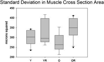 Standard deviation in muscle fiber cross sectional area (CSA). Box and whisker plot showing that radiation treatment caused a significant (p<.001) increase in the SD of muscle fiber CSA. Boxes depict the interquartile range (IQR), with a line at the median. Whiskers extend to the last observation within 1.5x the IQR. The closed circles are observations beyond 1.5x the IQR. Y = Young Adult Control; YR = Young Adult Radiated; O = Old Control, OR = Old Radiated.