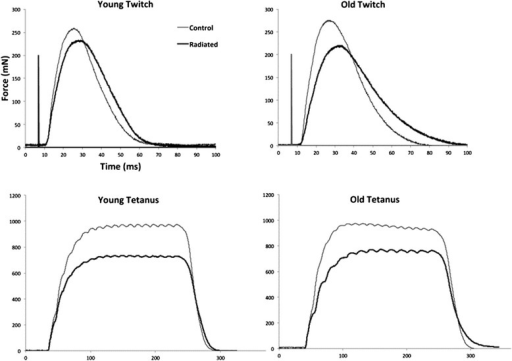 Representative twitch and tetanic contractions from young adult control, young adult radiated, old control, and old radiated rat. These examples are representative of group findings, with smaller tetanic and twitch contraction magnitudes (mN), longer CT (ms) and longer HDT (ms) in radiated rats. Age effects are also demonstrated here with longer CTs and HDTs, as well as reduced twitch forces in the old rats.