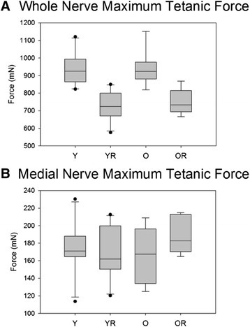 Maximum tetanic force. Box and whisker plot showing that (A) radiation treatment was associated with significantly (p<.001) reduced maximum tetanic tongue force during whole nerve stimulation in both age groups, and (B) that age and radiation did not have a significant effect on maximum tetanic force during medial nerve stimulation. Boxes depict the interquartile range (IQR), with a line at the median. Whiskers extend to the last observation within 1.5x the IQR. The closed circles are observations beyond 1.5x the IQR. Y = Young Adult Control; YR = Young Adult Radiated; O = Old Control, OR = Old Radiated.
