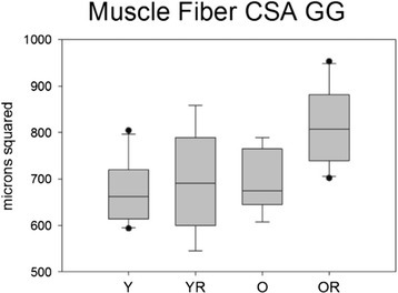 Muscle fiber cross sectional area (CSA). Box and whisker plot showing that the old radiation animals had significantly (p=.001) larger muscle fiber CSA. Boxes depict the interquartile range (IQR), with a line at the median. Whiskers extend to the last observation within 1.5x the IQR. The closed circles are observations beyond 1.5x the IQR. Y = Young Adult Control; YR = Young Adult Radiated; O = Old Control, OR = Old Radiated.