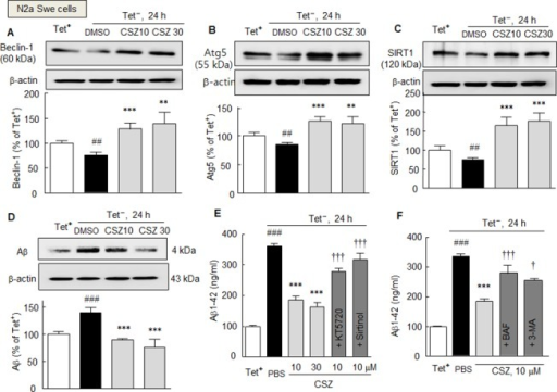 A—C. Inhibition of Tet- condition-induced reductions in beclin-1 (A), Atg5 (B) and SIRT1 expressions (C) by cilostazol (10 or 30 μM) in N2aSwe cells. D. Inhibition of Tet- condition-induced endogenous increases in Aβ level by cilostazol as determined by Western blotting (D) and of intracellular Aβ accumulation as determined by ELISA (E, F). The inhibitory effects of cilostazol were blocked by KT5720 (1 μM), sirtinol (20 μM) (E), bafilomycin A1 (BAF, 100 ng/ml), or 3-methyladenine (3-MA, 2.5 mM) (F).Results are presented as means ± SDs (N = 4–5). ##P < 0.01, ###P < 0.001 vs. Tet+ condition (as control), **P < 0.01 ***P < 0.001 vs. DMSO; †P < 0.05, †††P < 0.001 vs. cilostazol alone (CSZ, 10 μM). PBS, phosphate-buffered saline.