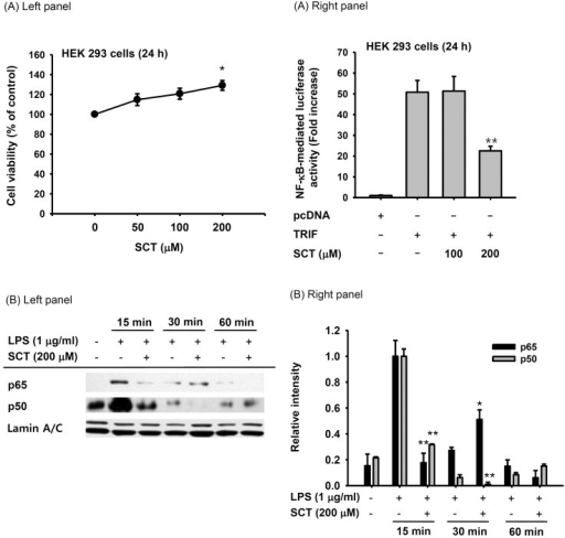 Effect of SCT on the transcriptional activation of inflammatory gene expression. (A, left panel) HEK 293 cells (5×105 cells/ml) were incubated with SCT for 24 h. Cell viability was measured by the MTT assay. (A, right panel) HEK 293 cells were treated with SCT for 24 h after cotransfection with NF-κB-Luc, TRIF, or pcDNA for 24 h. Luciferase activity was determined using a luminometer. (B left panel) Nuclear translocation of NF-κB subunits was detected by immunoblot analysis of nuclear fractions. Relative intensity (B right panel) was calculated using total levels by the DNR Bio-Imaging system. *p<0.05 and **p<0.01 compared with the control group.