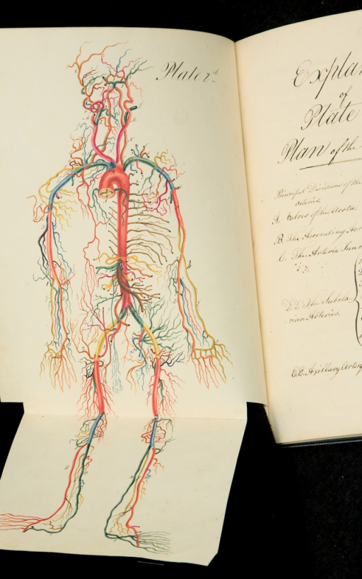 <p>Colored map of arteries and veins in the human body. This image works at two levels: it is both a map of arteries and veins and a recognizable human form, yet without a clear outline -- an absence that renders it somewhat surreal, especially at the head. &quot;Drawings,&quot; pl. 2.</p>