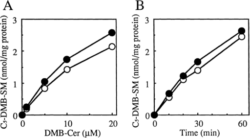 SM synthase activity in wild-type and LY-A cell lysates. (A) The dependence of C5-DMB-SM formation on a dose  of C5-DMB-Cer. Cell lysate (100 μg protein) was incubated in an  SM synthase assay mixture containing the indicated amounts of  C5-DMB-Cer for 30 min. (B) Time course of C5-DMB-SM formation. Cell lysate (100 μg protein) was incubated in an SM synthase assay mixture containing 10 μM C5-DMB-Cer for the indicated times. C5-DMB-SM produced was determined as described  in Materials and Methods. Open symbols, wild-type CHO lysate;  closed symbols, mutant LY-A lysate.
