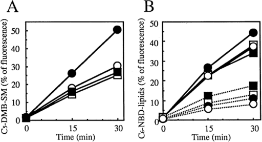 Metabolism of C5-DMB-Cer and C6-NBD-Cer in normal and ATP-depleted cells over time. Cells were preincubated  in Ham's F-12 with or without energy inhibitors (50 mM 2-deoxy- d-glucose and 5 mM NaN3) for 15 min at 33°C, then incubated  with 1.25 μM C5-DMB-Cer (A) or 5 μM C6-NBD-Cer (B) for 30  min at 4°C. After washing, cell monolayers were further incubated in Nutridoma medium containing 0.34 mg/ml BSA with or  without the inhibitors for the indicated time at 33°C. Lipids extracted from the cells were separated by TLC, and the amounts  of C5-DMB-SM (solid lines in A), C6-NBD-SM (solid lines in B),  and C6-NBD-GlcCer (dotted lines in B) were determined. Formation of C5-DMB-GlcCer was too low to be quantified. Closed  circles, wild-type cells without inhibitors; open circles, wild-type  cells with inhibitors; closed squares, mutant LY-A cells without  inhibitors; open squares, mutant LY-A cells with inhibitors.