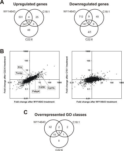 Similarities between two dietary unsaturated fatty acids and the synthetic PPARα agonist WY14643.(A) Venn diagrams showing the overlap in up- (left panel) and downregulated (right panel) genes after treatment with WY14643, C22:6 and C18:1. Genes were considered statistically significantly regulated if P<0.01. (B) Scatter plots demonstrating similarities in gene regulation between C22:6 and WY14643. Graphs show fold change in gene expression after treatment with WY14643 compared to C22:6 and C18:1. Genes that are upregulated disproportionally strongly by WY14643 (Cd36, Fabp4 (aP2), and Cpt1b), or by C22:6 (Prlr and Txnip) are marked. In constructing the scatter plots, all probesets left after IQR-filtering were used. (C) Overlap in overrepresented Gene Ontology classes between C22:6, C18:1, and WY14643, based on a functional class score (FCS) method. The GO class unique to C22:6 and C18:1 is GO:0016070 (RNA metabolism), whereas the GO classes unique to C18:1 are GO:0007409 (axonogenesis) and GO:0016072 (rRNA metabolism).