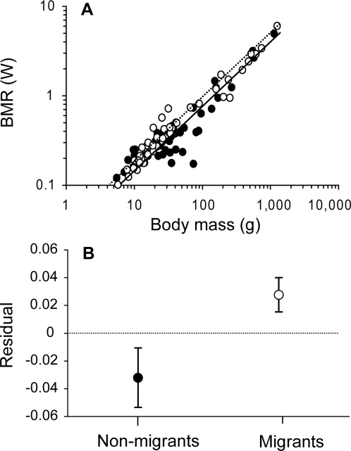 Avian BMR increases with body mass, and is higher in migrants than non-migrants.A Individual data points and partial regression fits for non-migrants (black, solid line) and migrants (open, dotted line). B average residuals (±s.e.) from the overall regression of log BMR on log body mass for non-migrants and migrants. Full dataset (N = 135).