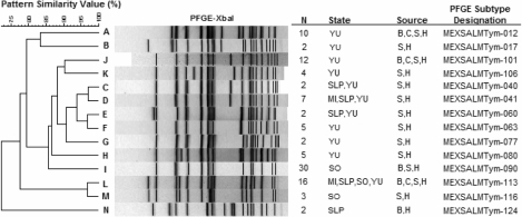 Selected pulsed-field gel electrophoresis (PFGE) clusters that represent 102 strains of Salmonella Typhimurium and shared indistinguishable PFGE patterns among humans (H), chicken meat and intestine (C), pork meat and swine intestine (P), and beef meat and cattle intestine (B). Several clusters (C,D, E, and L) were present in more than one state. MI, Michoacan; SLP, San Luis Potosi; SO, Sonora; YU, Yucatan. An expanded version of this figure containing the complete set of PFGE patterns is available from http://www.cdc.gov/EID/content/14/3/429-G2.htm.