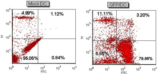 mRNA transfection of DC. GFP mRNA delivery into DCs of patient 1 with electroporation (500 V, 300 μs). FACS analysis of transfected DC and Mock as a control is shown. Viability percentage was 85.7% in transfected cells as compared with 93.9% in control Mock. Transfection efficiency was 79.8%.