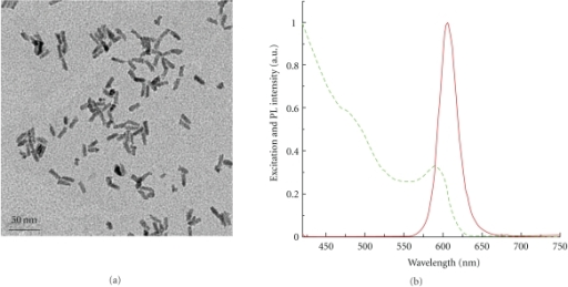QR-si510 siRNA nanoplex characterization: Representative figures of (a) Transmission electron microscope image of nanoplexes showing that the average diameter of the nanoplex is ~15–20 nm (bar scale = 50 nm). No aggregation was observed after nanoplex formation. (b) Absorption (red line) and Emission spectra (green line) of QR-si510 siRNA nanoplexes.