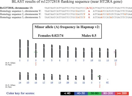 BLAST alignment analysis of the flanking sequence of a sex-associated SNP (rs12372818 on chromosome 13). Two homologous sequences are present on the Y chromosome (and one on chromosome 3). The presence of the 'A' variant on chromosome Y is responsible for a higher frequency of the minor allele in males.
