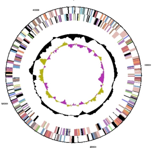 Graphical circular map of plasmid pHALXA01. From outside to center: Genes on forward strand (colored by COG categories), genes on reverse strand (colored by COG categories), GC content, and GC skew.