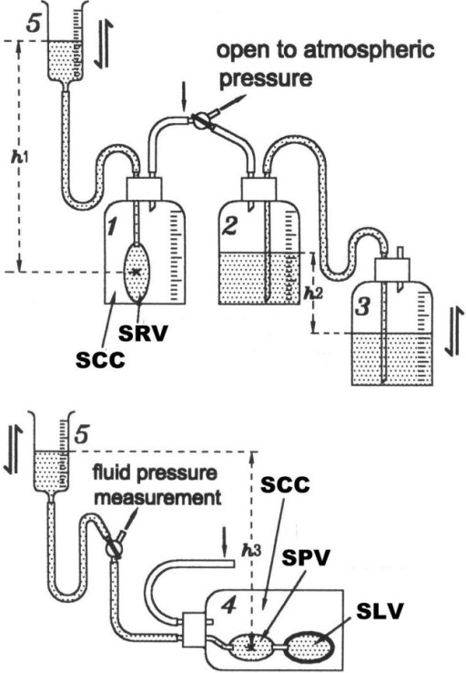 Scheme of Model 1.Five bottles labeled with number 1 to 5 were used and were connected by rubber and glass tubing. No. 5 is a syringe of 50 C.C. without the piston. The top panel is a simulated SVR connected with a negative-positive-pressure-generator (Bottle No.2 and 3) through rubber and glass tubing. The bottom panel is the simulated PVR. SCC = simulated chest cavity, SLV = simulated left ventricle, SRV = simulated right ventricle, SVR = systemic venous return system, PVR = pulmonary venous return system.