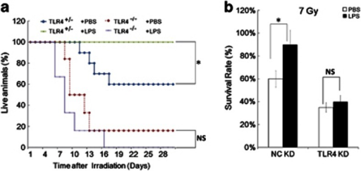 The radio-protective role of TLR4 agonist LPS in a TLR4 dependent manner. (a) LPS can protect TLR4+/− mice, but not TLR4−/− mice, from radiation damage. N=10, three repeats. (b) Male C57BL/10 mice, 6 weeks of age, injected with TLR4 specific in vivo KD reagents or with non-specific control in vivo KD reagents (From ABI, once a day for 2 days, N=12 in each group). Forty-eight hours later mice were treated with or without LPS at 2.5 mg/kg body weight for another 24 h, and then exposed to 7 Gy. The figure shows the survival rate of each group. *P<0.05; NS: No significant difference detected