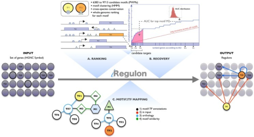 Regulon detection by rank-based motif discovery and motif2TF.Motif enrichment in iRegulon is measured using a ranking-and-recovery procedure using a large collection of position weight matrices (PWM). In the ranking step (A) all human genes are ranked for each motif by scoring for homotypic motif clusters across ten vertebrate species. In the recovery step (B) each of these gene rankings is tested against the set of input genes by calculating the Area Under the cumulative Recovery Curve (AUC, in pink). The example shown is for the top enriched motif, motif M2. The AUC score is normalized, based on the AUC scores of all motif rankings (distribution is shown as inset), to a normalized enrichment score (NES). A high NES score (≥3.0) indicates a motif that recovers a large proportion of the input genes within the top of its ranking. In parallel, the leading edge of the recovery curve is used to determine the optimal subset of genes that are likely controlled by this motif. In the last step (C) Motif2TF associates the candidate motif with (a number of) TFs by finding possible paths from a motif to a TF, in a motif-TF network based on direct evidence, orthology, and motif-motif similarity. The enriched TF can be from the input genes (e.g. TG5 encoding for TF2). See also Materials and Methods and Figures S1, S4.