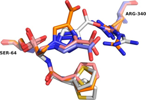 Overlay of the S02030 inhibitor conformations in all fourADC-7 active sites. The R1 side chain binds similarly in all fourconformations. Differences arise in the placement of the inhibitorR2 group (carboxytriazole) and its interaction with Arg340. In monomersB (purple) and C (salmon), the R2 group adopts similar conformationsand interacts with Arg340, which is observed in a single conformation.In monomers A (white) and D (orange), the conformations of the inhibitorare somewhat different, and alternate and/or multiple conformationsof Arg340 are also observed.