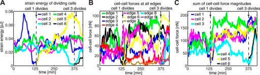 Force dynamics during cell divisions in cluster shown in Figure 4.(A) Strain energies exerted by individual cells. (B) Fluctuations of cell–cell forces at individual junctions. (C) Total cell–cell forces exerted by individual cells.DOI:http://dx.doi.org/10.7554/eLife.03282.011