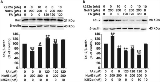Effect of K252a on H2S-caused suppression in formaldehyde-induced upregulation of Bax and downregulation of Bcl-2 in PC12 cells.PC12 cells were pre-incubated with K252a (10 nM) for 30 min before pretreatment with NaHS (200 μM) for 30 min prior and the cotreated with formaldehyde (FA, 120 μM) for 24 h. The expression of Bax (A) and Bcl-2 (B) were detected by Western blot using anti-Bax antibody and anti-Bcl-2 antibody, respectively. In all blots, β-actin was used as a loading control. The ratio of Bax or Bcl-2 to β-actin was normalized by the value in control group. Values were expressed as the mean ± S.E.M. of three independent experiments. **P < 0.01, versus control group; ##P <0.01, versus NaHS-treated alone group; $ $P <0.01, versus FA-treated alone group; &&P < 0.01, versus cotreated with NaHS and FA group.