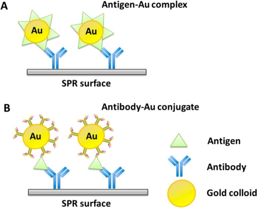 Schematic diagram of an immunochemical molecular recognition to illustrate the utility of Au colloid-enhanced biosensing. Two strategies for particle-enhanced SPR immunosensing are described: (A) Direct binding of the antigen-Au complex to an antibody-modified surface; (B) Antibody-modified surface followed by binding of a free antigen and then a secondary antibody-Au conjugate. Adapted from [112].