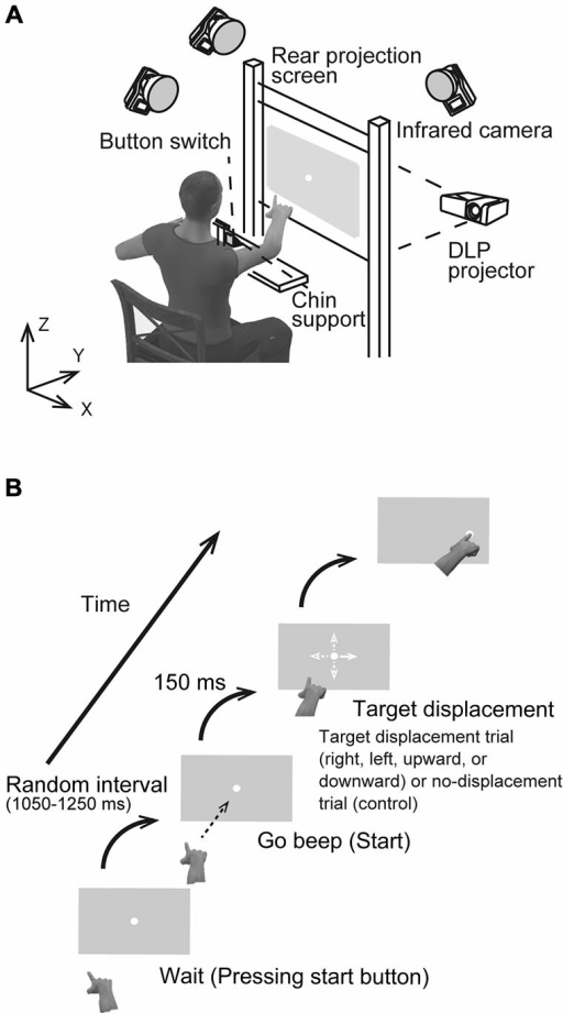 (A) Schematic drawing of the experimental setup. Participants were asked to reach toward a visual target presented at the center of a screen placed at a distance of 0.5 m in a darkened room. (B) The sequence of a visual stimulus in the rightward target displacement condition. Four possible target displacement directions were implemented: to the right, left, upward, or downward from the center (all distances 4.5 cm). In the control condition, the target remained at the central position.