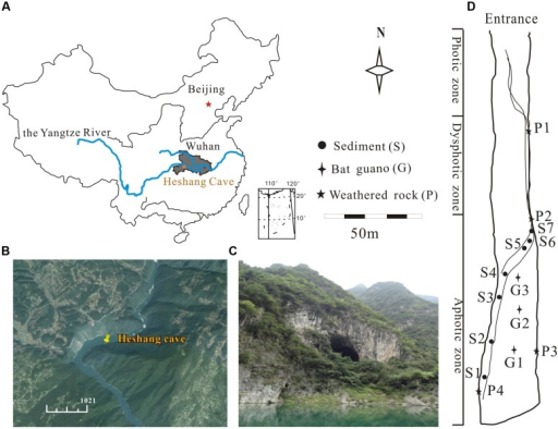 Location of the Heshang Cave and sampling sites.(A) The dark gray area shows the location of Hubei province. (B) The location of the Heshang Cave indicated by GPS, which lies in the south bank of the Qingjiang Valley, in the middle reaches of the Yangtze River (http://www.google.com/earth/). (C) Outside view of the Heshang Cave. (D) Sampling sites of sediments (S), weathered rocks (P), and bat guanos (G).