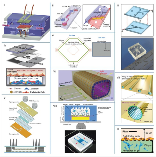 Examples of microfluidic BBB models from literature. Reprinted and adapted with permission from: I Booth68; II Yeon69; III Griep70; IV Achyuta71; V Prabhakarpandian72; VI Cho44; VII Kim73; VIII Brown74; IX Sellgren75; X Walter76.