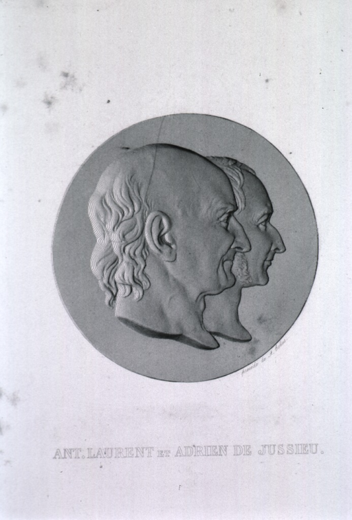 <p>Right profile on medallion.</p>