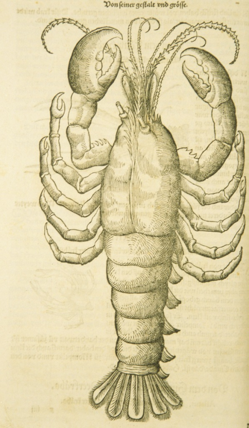 <p>Woodcut illustration of a lobster.</p>