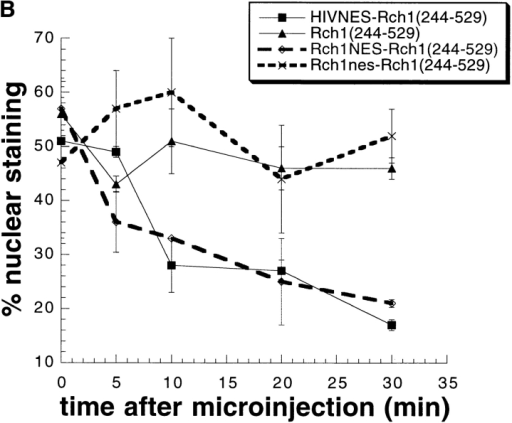 (A) Export of Rch1244–529 is restored by a nuclear export signal. HIVNES-Rch1244–529 (a and b), Rch1NES-Rch1244–529  (c and d), and Rch1nes-Rch1244–529 (e and f) were injected into nuclei of Vero cells. Cells were fixed either at a 0-min time point (a,  c, and e) or 30 min later (b, d, and f). Immunofluorescence  was performed using an anti-T7 antibody. (B) Export kinetics  of Rch1244–529, HIVNES-Rch1244–529, Rch1NES-Rch1244–529, and  Rch1nes-Rch1244–529. Nuclear fluorescence at different time points  after injection was determined as described (Fig. 1 B). Bar, 25 μm.