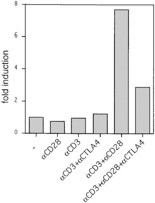CTLA-4 reduces  JNK activity induced by CD3  and CD28 triggering. Preactivated T cells were coated with  different combinations of antibodies and lysed 10 min after addition of warm cross-linking antibody. Lysates were tested for  JNK activity by precipitation  with GST–c-jun precoupled to  glutathione beads followed by in  vitro kinase reactions as described in Materials and Methods. Phosphorylated GST–c-jun is  indicated by the arrow (top). The  same lysates were tested for JNK  protein abundance on immunoblot (middle). JNK activities were  quantified using a phosphorimager and represented as relative  values compared to JNK activity  from unstimulated cells (unstimulated = 1; bottom). Data for the  10-min time point are shown  because no JNK activity could  be measured at earlier times.