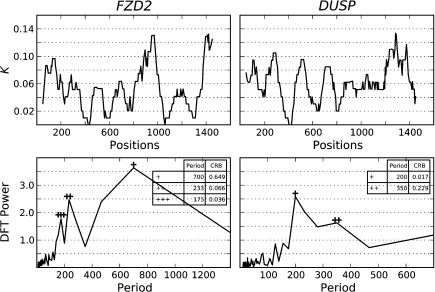 Signal analysis of substitution amplitude spectra from DUSP and FZD2 promoters. The plot columns correspond to the indicated loci. The upper plot row shows K, whereas the lower row its DFT-based amplitude spectrum. Periods of the footprinting signal appear as peaks of the amplitude spectrum. The first, second, and third highest peaks are annotated with a corresponding number of +, and their period lengths, and CRB are shown in the tables.