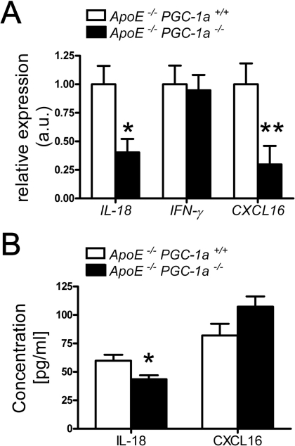 Aortic and plasma expression levels of IL-18 and CXCL16.(A) Reduced aortic mRNA expression of IL-18 and CXCL16, but no change in the expression of IFN-γ is observed in ApoE−/− PGC-1α−/− compared to ApoE−/− PGC-1α+/+ mice. n≥9 per genotype. (B) In plasma samples only IL-18, but not CXCL16 protein levels differed between ApoE−/− PGC-1α−/− and ApoE−/− PGC-1α+/+ mice. n≥10 per genotype. * p<0.05; ** p<0.01.