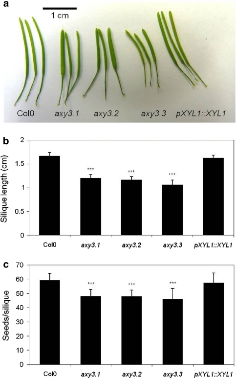 Silique phenotype in axy3 mutants. a Mature siliques of 6 weeks' old plants from Col0, axy3.1, axy3.2, axy3.3 and complemented axy3.1 line (pXYL1::XYL1). b Average silique length (n = 10–12, ±SD) of mature siliques from 6 weeks old plants. c Average number of seeds per silique (n = 24, ±SD) of siliques from 2-month-old plants. *** Indicates significant differences between mutant and wild-type/complemented axy3.1 line (p = 0.001)