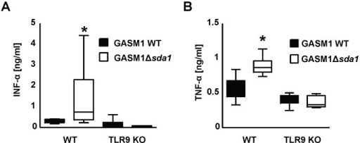 GAS DNase Sda1 diminishes local secretion of IFN-α and TNF-α in a mouse necrotizing fasciitis model.(A and B) IFN-α and TNF-α concentrations were measured by ELISA in skin homogenates of mice infected with WT GASM1 or Δsda1 mutant strains 4 days previously. Samples derived from WT mice infected with GASM1 WT contained significantly lower levels of IFN-α and TNF-α compared to the samples derived from WT mice infected with GASM1 Δsda1. Low levels of IFN-α and TNF-α were detected in TLR-9 mice irrespective of the presence of Sda1. Data are displayed as box blots with n = 5 for the group of TLR9 mice injected with GAS Δsda1 and n = 6 for the other groups. Box and whiskers plot, box containing 50% with median, whiskers 2.5–97.5%. The data shown are pooled from two independent experiments. In (A) ANOVA was significant at *P<0.05, with the group of WT mice infected with GASM1 Δsda1 having stronger IFN-α induction (Bonferroni comparison). In (B) a factorial analysis revealed that both the mouse (P<0.01) and bacteria strain (P<0.02) as significant factors with significant interaction (P<0.01).