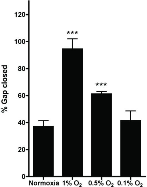 Hypoxia has a profound effect on cell migration in a gap closure assay. Shown is the percentage of the gap that is closed after 16 hours. Results are from two representative experiments with two replicates each. Asterisks indicate statistical significance compared to the normoxic control.