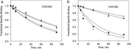 The influence of tBHP on allosteric regulation of M3 muscarinic receptors expressed in CHO cells is illustrated. a The dissociation of [3H]MS was measured by incubating CHO-M3 cell membranes with 1 nM [3H]MS for 1 hour before adding an excess of atropine (10 μM) to block the forward binding reaction. The off rate was measured in the absence (circles) and presence (triangles) of 10 μM gallamine in control (open symbols) or tBHP-exposed (2 mM 90 min) cells (closed symbols). Dissociation rate constants are listed in Table 1. b Similar responses in CHO cells expressing human M2 muscarinic receptors are shown. M2 receptors were examined because they typically display a more pronounced allosteric effect.