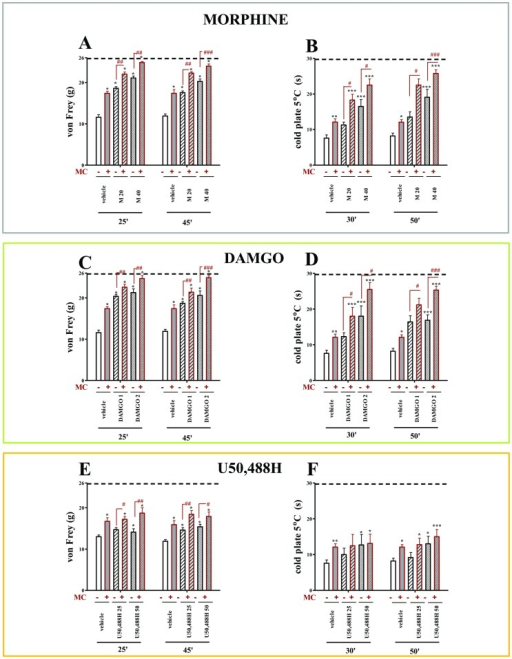 The effects of morphine, DAMGO and U50,488H on vehicle- and minocycline-treated CCI-exposed rats.The response to morphine, DAMGO and U50,488H was measured 25 and 45(A, C, E) and 30 and 50 minutes after administration by the cold plate test (B, D, F). Minocycline (MC; 30 mg/kg; i.p.) was administered intraperitoneally pre-emptively 16 h and 1 h before CCI, and then repeatedly twice daily for 7 days. Vehicle-treated and minocycline-treated rats received intrathecal morphine (M; 20; 40 µg/5 µl), DAMGO (1; 2 µg/5 µl) or U50,488H (25; 50 µg/5 µl) one hour after the last morning administration on day 7 after CCI. The data are presented as the mean response ± S.E.M. (8–16 rats per group). The results of the experiments were statistically evaluated using One-way Analyses of Variance (ANOVA). The differences between the treatment groups throughout the study were further analysed with Bonferroni's post-hoc tests. *P<0.05, **P<0.01 and ***P<0.001 indicate significant differences compared with vehicle-treated CCI-exposed rats; #P<0.05, ##P<0.01 and ###P<0.001 indicate significant differences between vehicle-treated CCI-exposed rats that received a single dose of morphine and minocycline-treated CCI-exposed rats that received a single dose of morphine, DAMGO or U50,488H. Dotted line is a value for naïve animals (for von Frey test 25.8 g; for cold plate test 29.7 s).